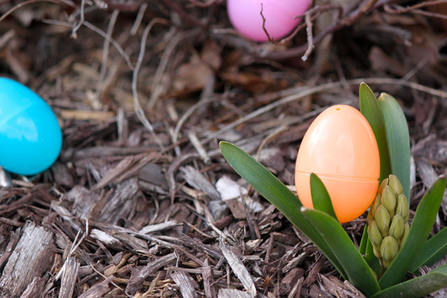 plastic eggs and spring blooms