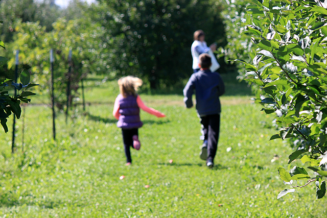 5 running orchard rows