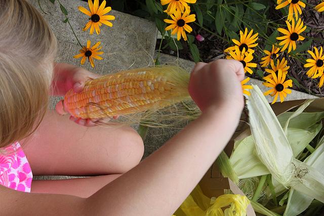 shuck corn front step silks