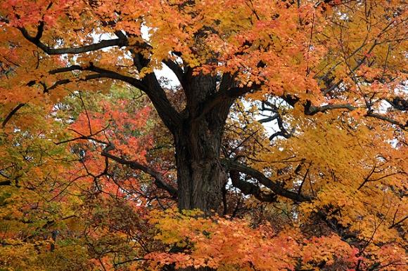 october 20 tree