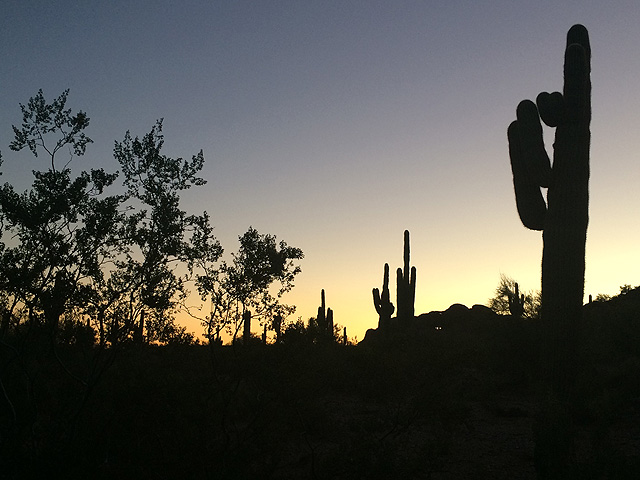 desert silhouette