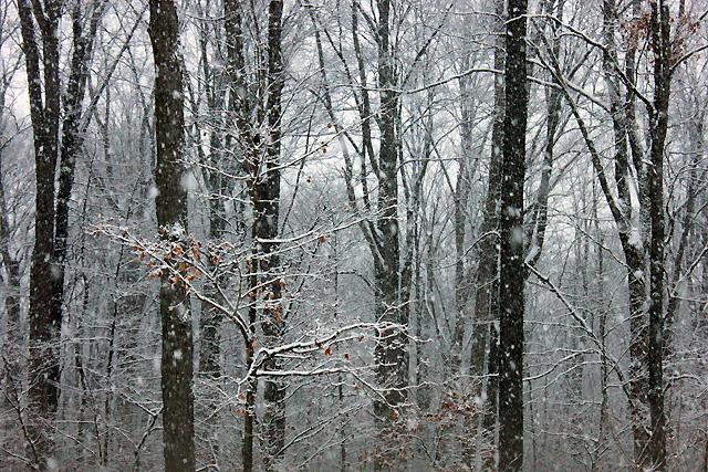 1 snowy january woods