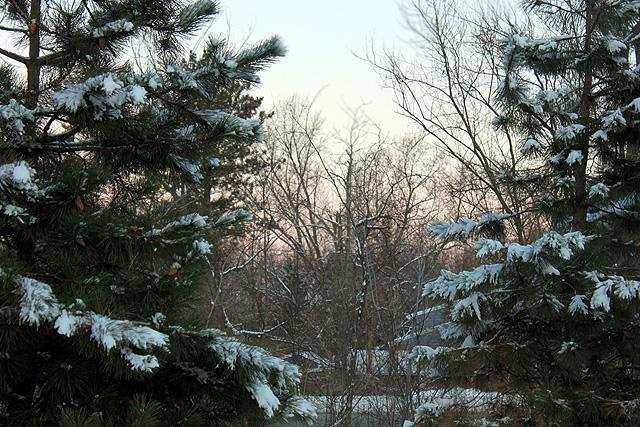 january snow 2015 135