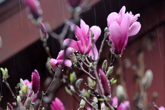 2 april 2015 dance rain 117 magnolia