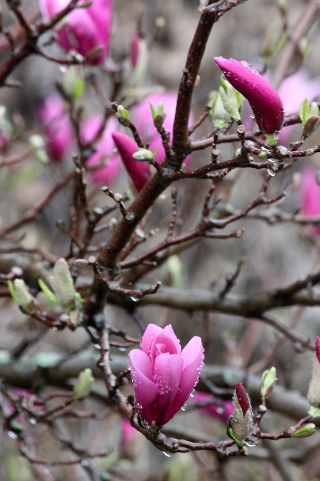 4 april 2015 dance rain 075 magnolia
