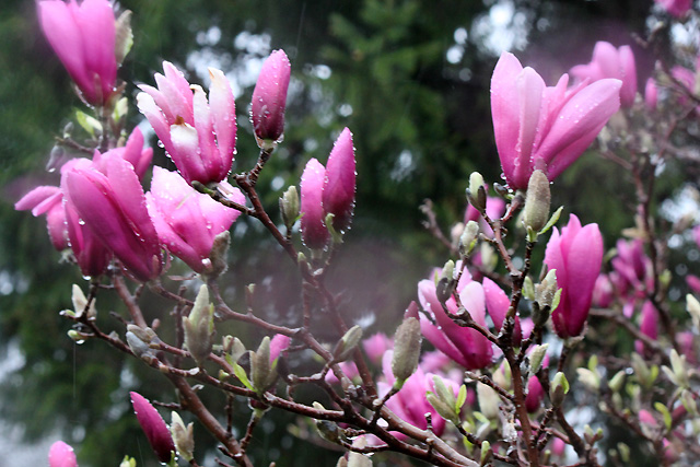 6 april 2015 dance rain 163 magnolia