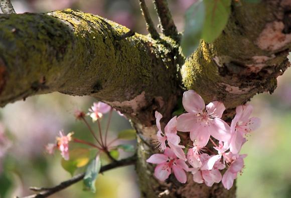 may petals 253 pink petals