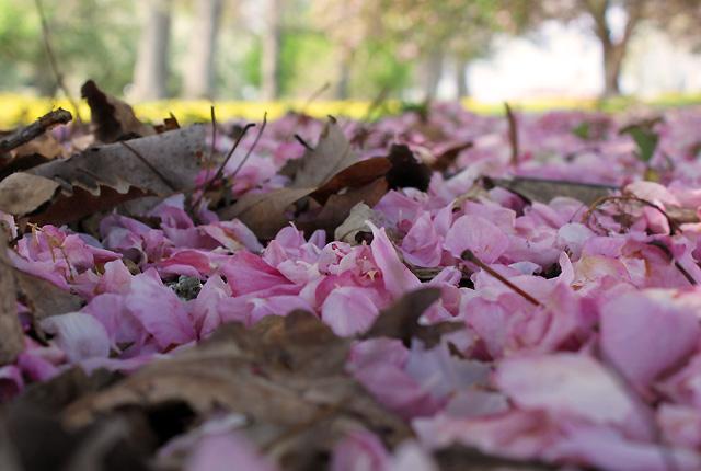 z may petals 046 petal carpet