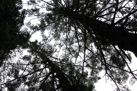 looking up silhouette alaska2015 528