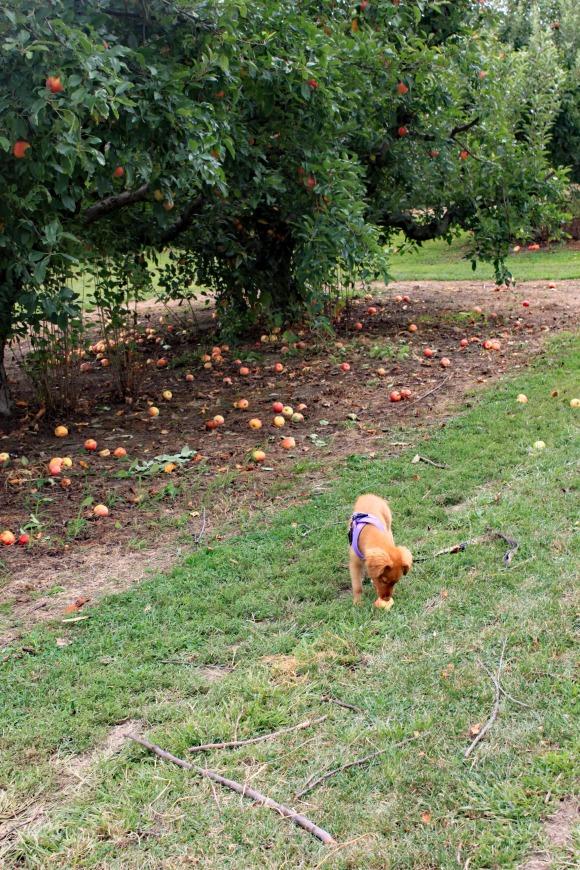 4 Josie Finds Apple