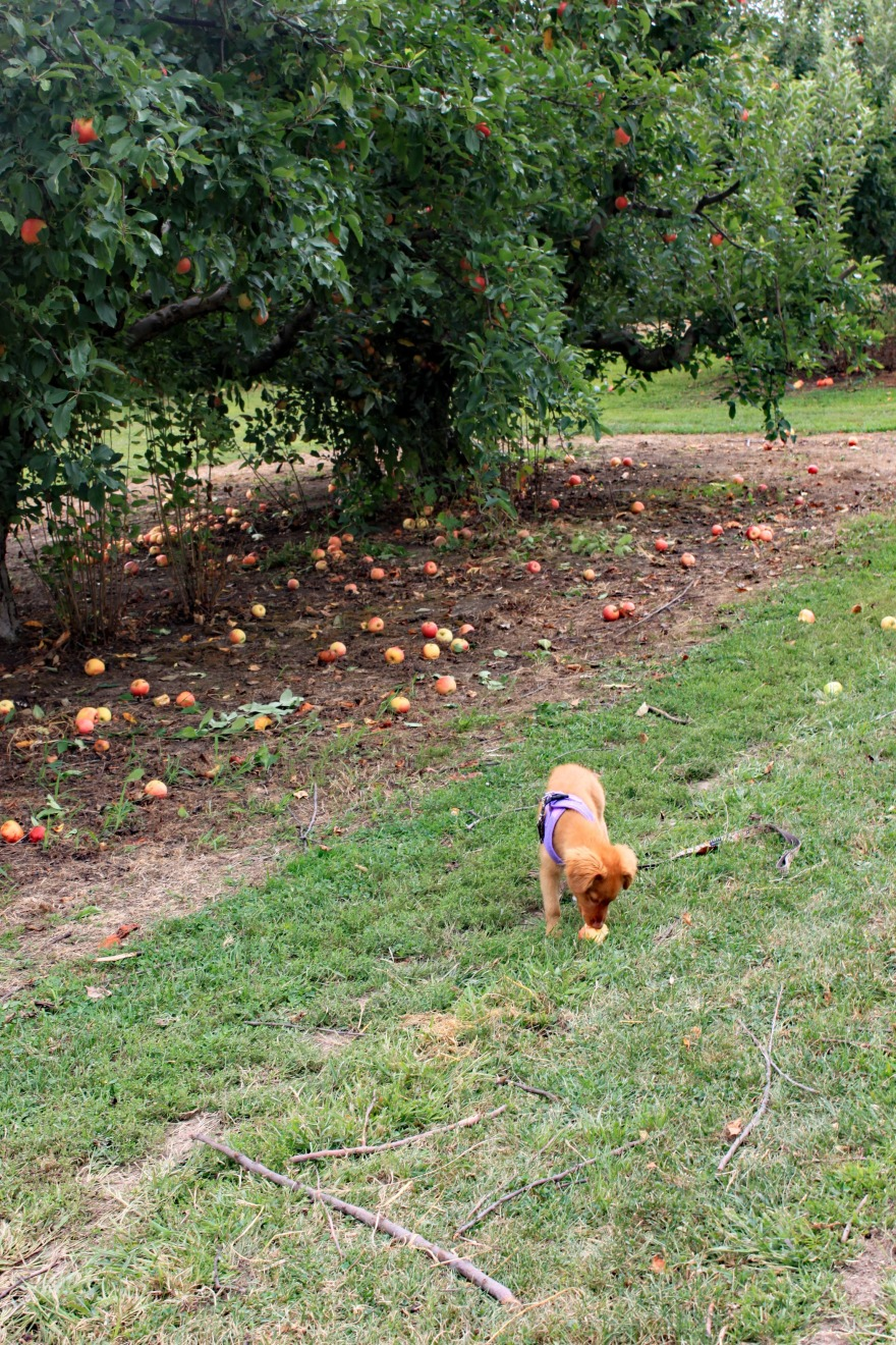 4 Josie Finds Apple